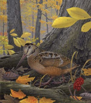 The season dates for American woodcock, as depicted in this painting by Kentucky Fish and Wildlife artist Rick Hill, changed for the 2016 season as did the September Canada goose season dates (Photo Provided)