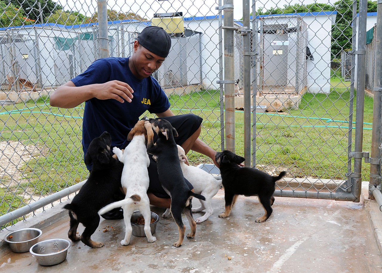 what is a animal shelter