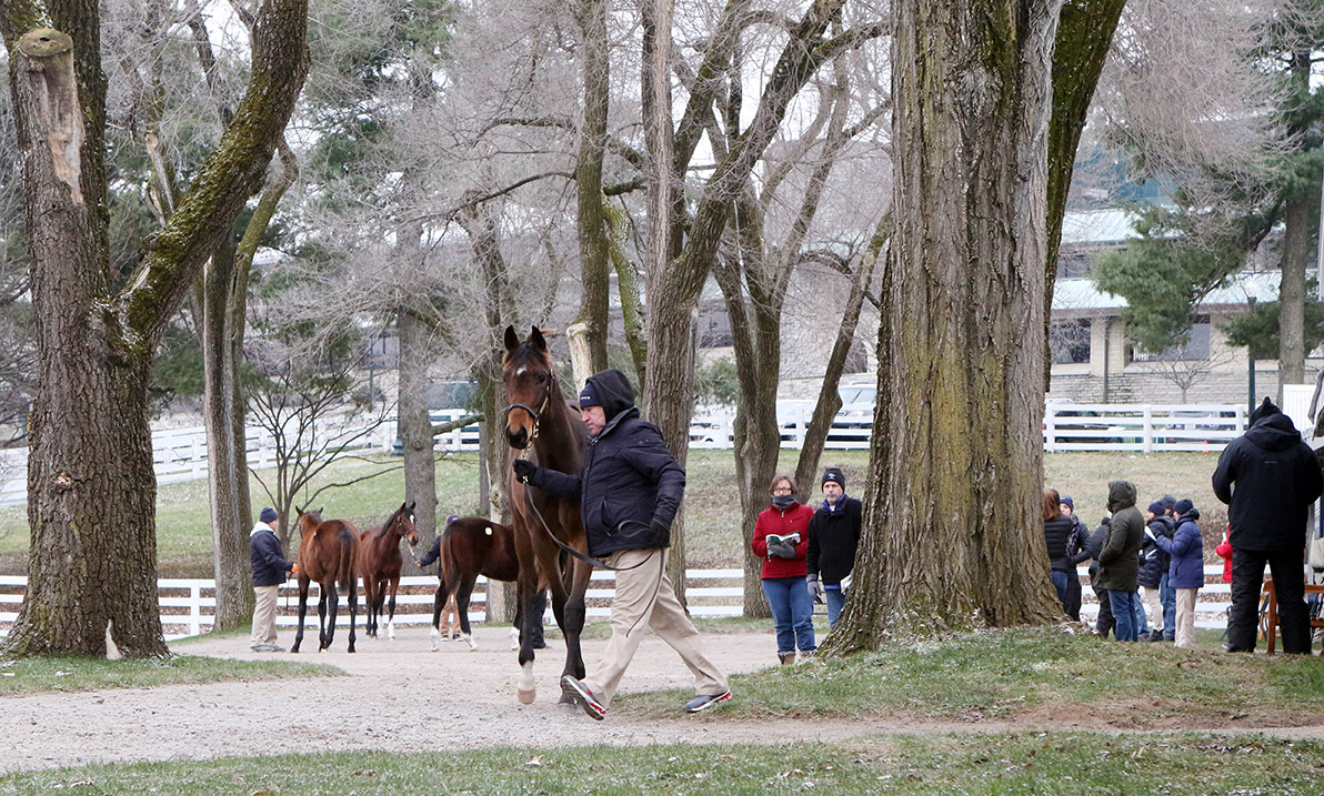 The catalog includes 726 broodmares, 147 broodmare prospects, 732 yearlings, 280 horses of racing age and seven stallions and stallion prospects (Keeneland Photo)