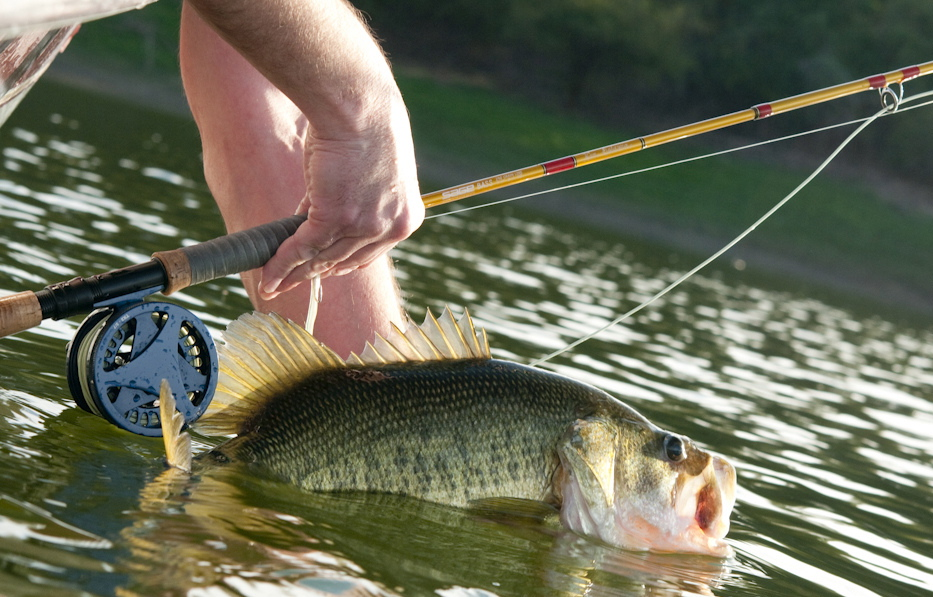 Art lander s outdoors rising water temperatures result in for Bass fly fishing setup