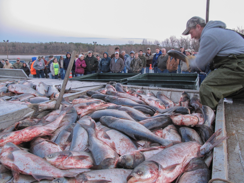 Hunting asian carp