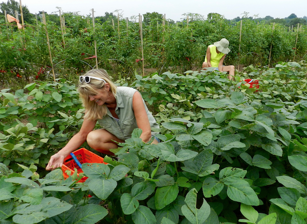 Picking endame -- encouraging sustainability and healthy eating